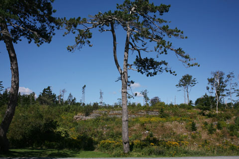 View of Park Point Pleasant with little tall trees