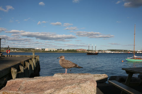 Port of Halifax with a seagull in the foreground