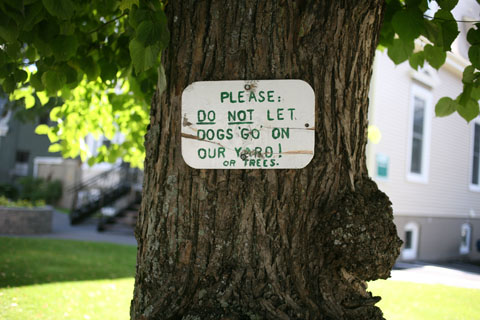 Hand-written not on a tree