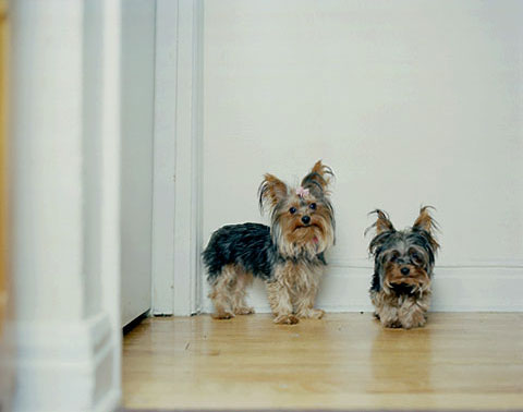 A portrait Genevieve's dogs Betty and Billy, from the photography project 'Dog | Dog Owner'