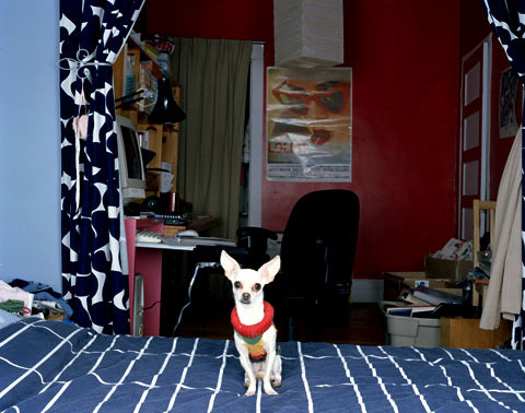 A portrait of Julie's dog Lolita, from the photography project 'Dog | Dog Owner'