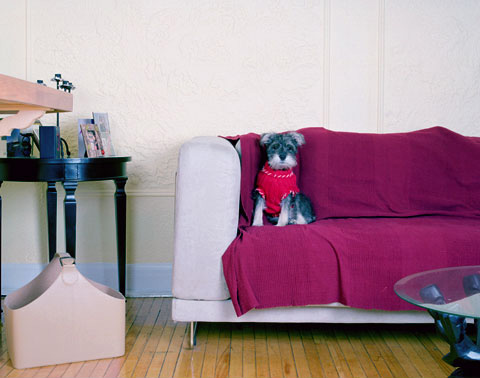 A portrait of Kinga's dog Fred, from the photography project 'Dog | Dog Owner'