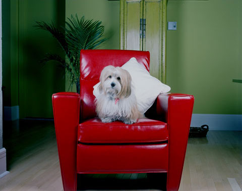 A portrait of Lucie's dog Megot, from the photography project 'Dog | Dog Owner'