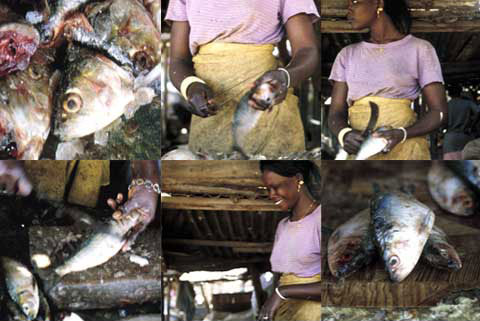 6 square images of a woman working in a fish market, from the project ' Senegal - Green - Fishmarket - Coiffeur'